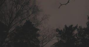 Ramos de árvore no parque da noite video estoque