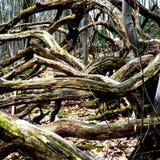 Ramos de árvore nos forets Fotografia de Stock