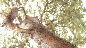 Ramos de árvore que movem-se pelo vento vídeos de arquivo
