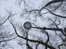 Ramos de árvore secos contra ramos de árvore secos do céu cinzento do inverno e silhueta da lâmpada no fundo do céu fotografia imagens de stock royalty free
