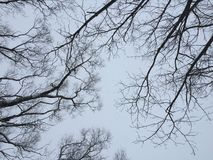 Ramos de árvore secos contra ramos de árvore secos do céu cinzento do inverno no fundo do céu fotografia fotos de stock royalty free