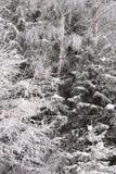 Ramos de árvore sob a neve foto de stock