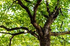 Ramos de árvore sob o dossel de floresta imagens de stock