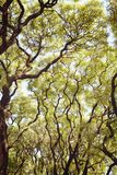 Ramos de árvore verdes luxúrias O sol morno da mola brilha através das árvores Folhas verdes grossas, paisagem exterior imagens de stock royalty free