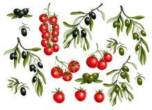 Ramos de azeitonas pretas e tomate de cereja isolado no fundo branco, ilustração do vetor ilustração do vetor