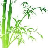Ramos de bambu da aquarela isolados no branco ilustração stock