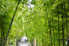 Ramos de bambu na luz do sol Foto de Stock Royalty Free