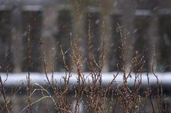 Ramos de Bush durante a queda de neve Imagem de Stock