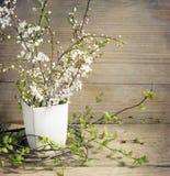 Ramos de florescência da cereja Fotografia de Stock Royalty Free