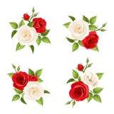 Ramos de rosas rojas y blancas Sistema del vector de cuatro ejemplos Fotografía de archivo