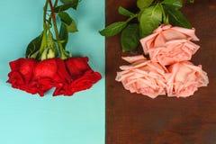 Ramos de rosas rojas y rosadas en un primer de madera oscuro y azul del fondo Imagen de archivo libre de regalías