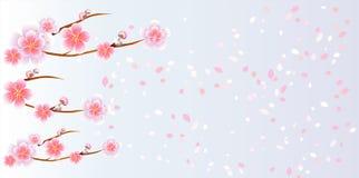 Ramos de Sakura e pétalas que voam na luz - fundo roxo azul flores da Apple-árvore Cherry Blossom Vetor EPS 10 Fotos de Stock Royalty Free