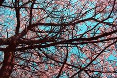 Ramos de uma árvore de florescência Fotografia de Stock