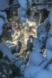 Ramos de uma árvore de Natal coberta com a neve imagem de stock