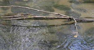 Ramos de uma árvore velha em um rio no dia filme