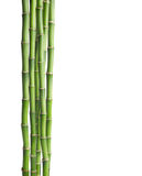 Ramos do bambu isolados no fundo branco Imagem de Stock Royalty Free