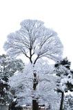 Ramos do inverno das árvores na geada na neve e no whi do fundo Imagens de Stock