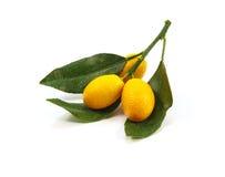 Ramos do Kumquat em um fundo branco Fotos de Stock