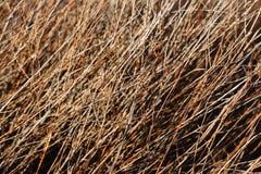 Ramos dos arbustos do fundo natural Ramos secos das ?rvores Arvoredos de Bush fotos de stock royalty free