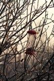 ramos e calha de alimentação Gelo-cobertos Fotos de Stock