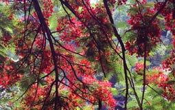 Ramos e flores coloridos de árvore Fotografia de Stock Royalty Free