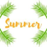 Ramos e lugar da planta verde para o verão do texto Fotografia de Stock Royalty Free