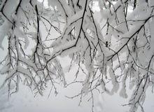 Ramos e neve branca imagem de stock royalty free