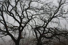 ramos escuros Imagens de Stock Royalty Free