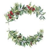 Ramos florales del invierno de la acuarela Ramas pintadas a mano del snowberry y del abeto, bayas rojas con las hojas, cono del p Fotos de archivo libres de regalías