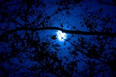 Ramos, galhos, e folhas escuros contra o escuro - céu azul em uma noite lua-iluminada fotos de stock