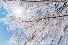 Ramos geados contra o céu azul Fotografia de Stock