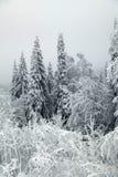 Ramos geados das árvores contra um céu cinzento Fotos de Stock Royalty Free