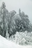 Ramos geados das árvores contra um céu cinzento Imagens de Stock