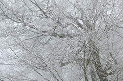Ramos geados no dia nevoento Fotos de Stock Royalty Free