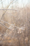 Ramos gelados congelados, fundo bonito do inverno Foto de Stock Royalty Free