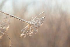 Ramos gelados congelados, fundo surpreendente do inverno Imagens de Stock