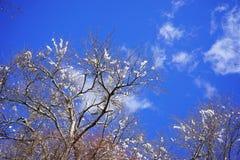 Ramos gelados das árvores do inverno Imagem de Stock