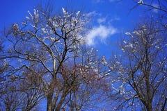 Ramos gelados das árvores do inverno Fotos de Stock