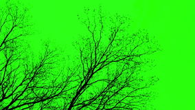 Ramos na tela verde
