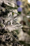 Ramos nevados da árvore de Natal Imagens de Stock Royalty Free