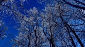 Ramos nevados sob um céu azul bonito foto de stock royalty free
