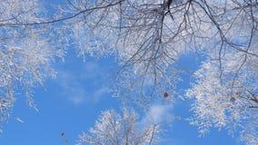 Ramos nevados sob um céu azul bonito foto de stock
