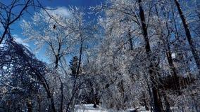Ramos nevados sob um céu azul bonito fotografia de stock royalty free