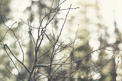 Ramos pequenos com pingos de chuva e luzes e cores bonitas Tema da mola e do verão/estação fotografia de stock