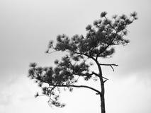 Ramos preto e branco da árvore Foto de Stock