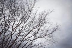 Ramos pretos no branco do céu Foto de Stock
