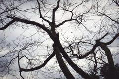 Ramos pretos no branco do céu Fotografia de Stock Royalty Free