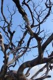 Ramos secados da árvore inoperante sombrio com céu foto de stock royalty free