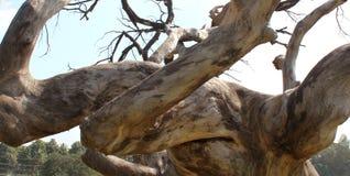 Ramos secados da árvore inoperante sombrio com céu fotografia de stock royalty free