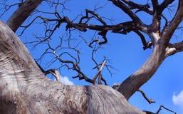 Ramos secados da árvore inoperante sombrio com céu imagem de stock royalty free